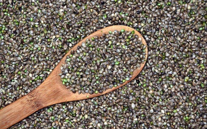 Síla konopí a konopných semínek je nezaměnitelná. Jak působí na lidské zdraví?
