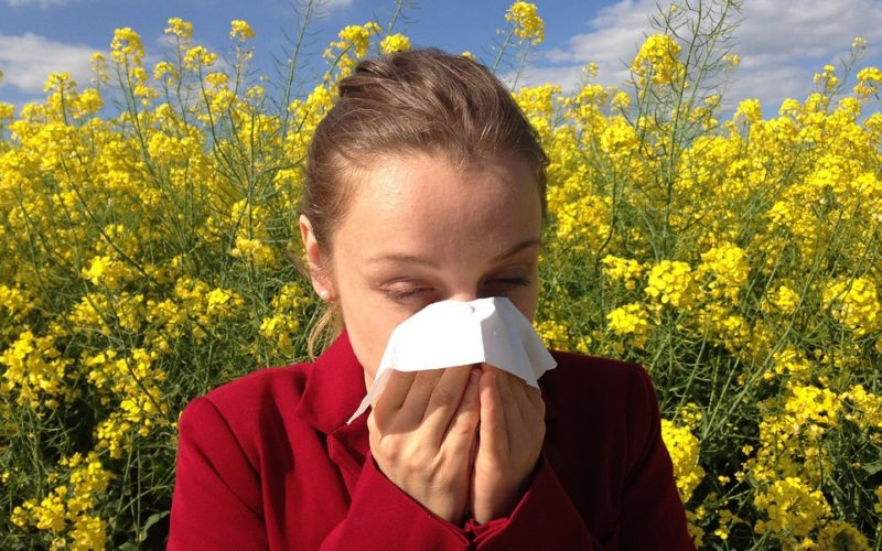 Pylová alergie. Co je dobré vědět